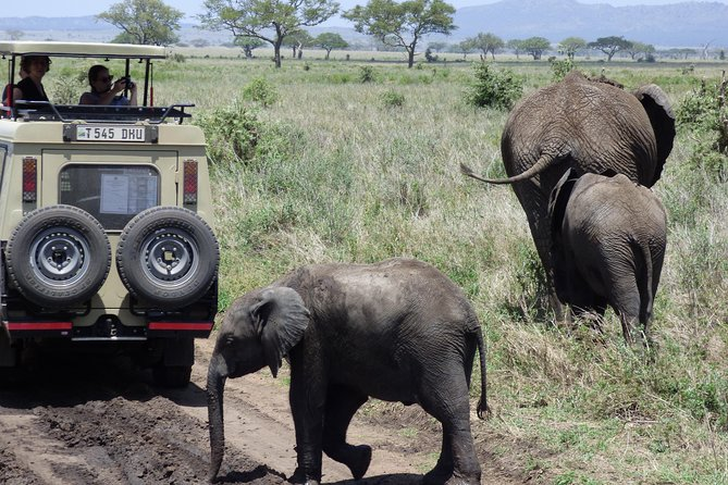 Cultural & Wildlife Safari: 4 Days, 3 Nights. Tarangire, Manyara, Eyasi & Crater
