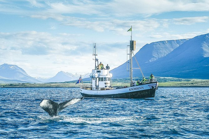 Whale Watching Tour on board a Traditional Oak Ship from Hjalteyri