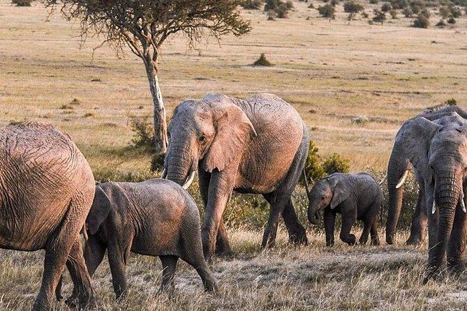 4-Day Best Maasai Mara & Lake Nakuru Safari (ECONOMY)