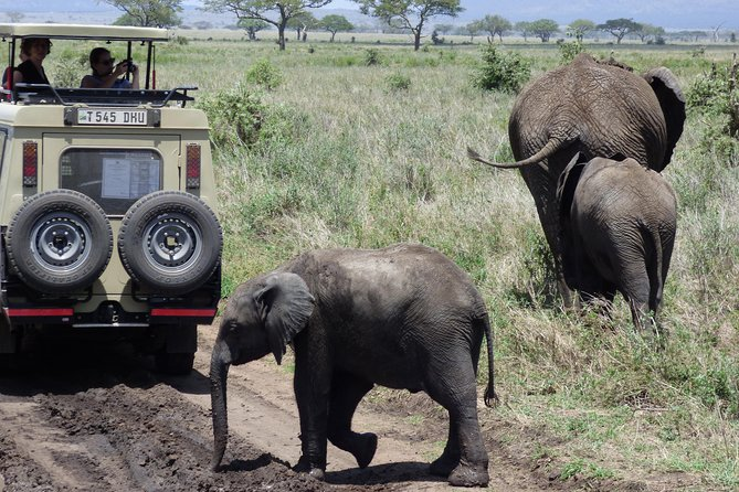 Wildlife Camping Safari: 4 Days, 3 Nights: Manyara, Serengeti, Ngorongoro