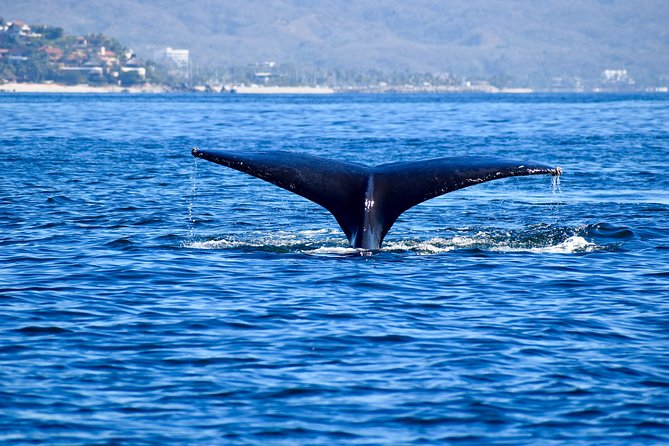 Private Marine Safari (experience whales, dolphins, turtles, and/or manta rays)