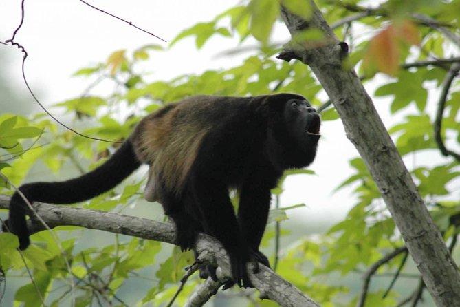 Skip the Line: Monkey Park Admission Ticket
