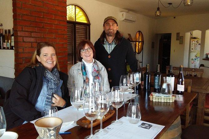 Maipú Wine and Olive Oil Tour