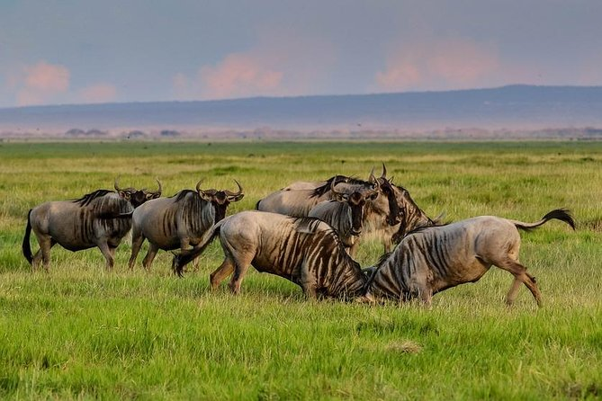 5 Days Tanzania Best Safari