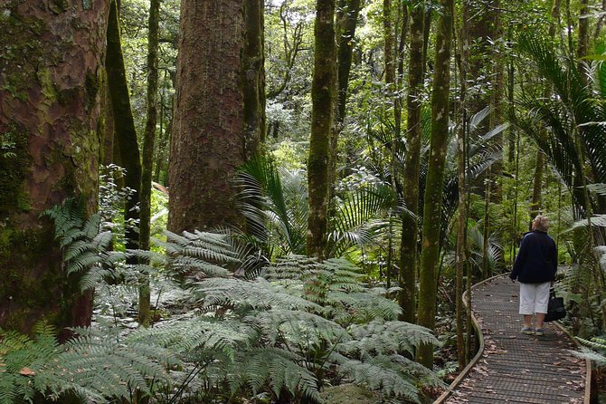 Bay of Islands Highlights Tour - With Glow Worm Caves