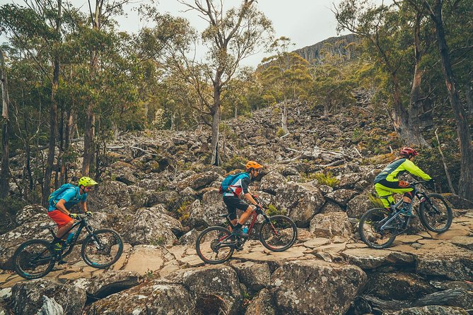 kunanyi/Mt Wellington Explorer Bus - One Way Tour
