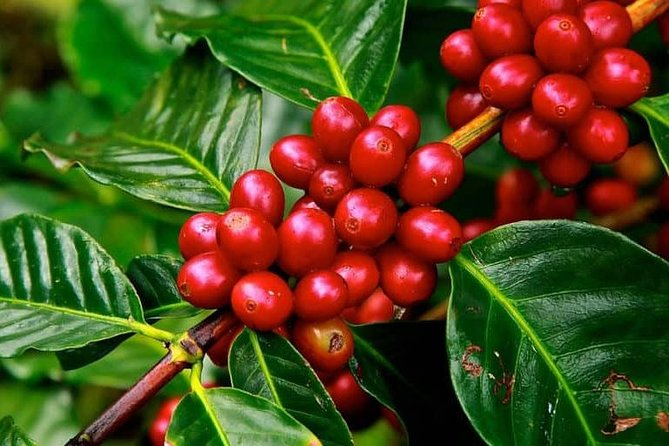 Coffee experience: Tradition and essence