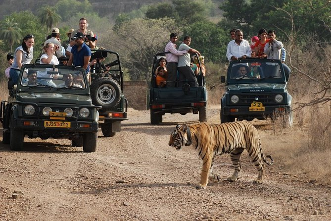 5 Days Private Delhi Agra Ranthambore Jaipur Delhi Tour (Taj Mahal at Sunrise)
