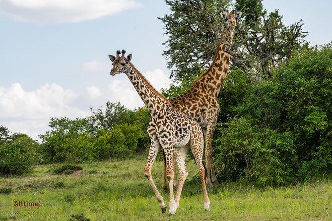 5 Days Budget Safari, 1Nt Nairobi,1Nt Nakuru, and 2Nts Maasai Mara