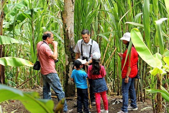 """""""El Trapiche"""" in Monteverde"""