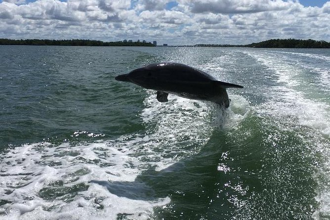 Dolphin Tours - Fort Myers Beach / Estero Bay photo 14