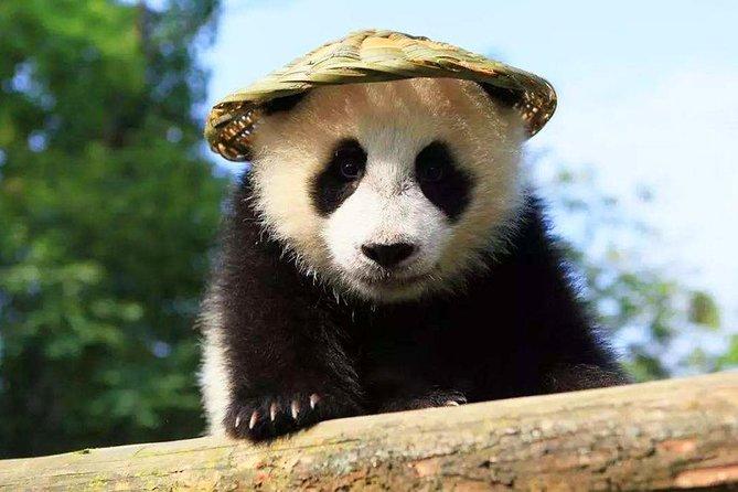 Visite privée d'une journée à Chengdu vers la base du panda de Chengdu et les principaux attraits de la ville