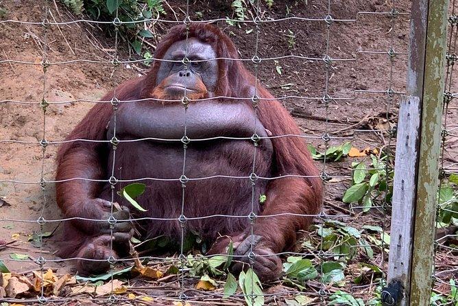 3D 2N Tour Penang-Camerons-Orangutan- Rainforest Taman Negara-Kuala Lumpur