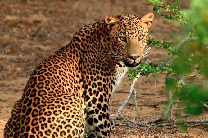 Yala Safari Day Trip from Galle , Unawatuna & Surroundings - All Inclusive