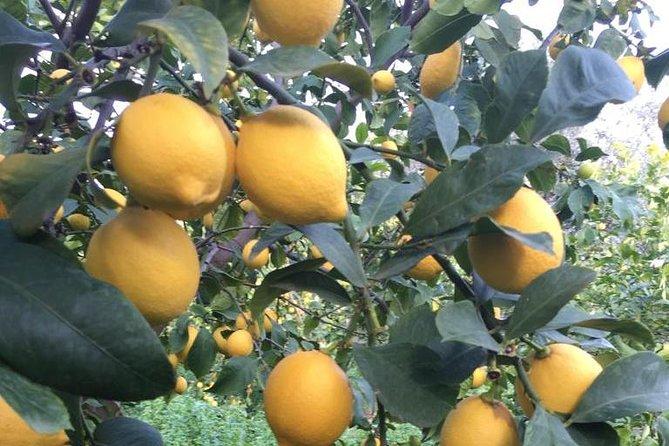 Visit the Biggest Lemon Farm in Greece