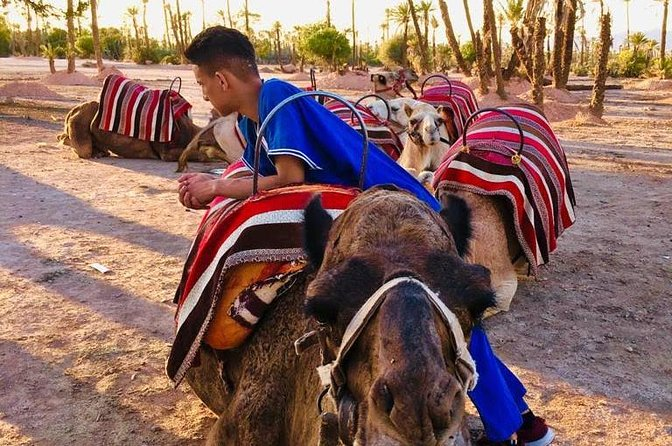 Small-Group tour Sunset Camel Ride in the palm Grove of Marrakech City
