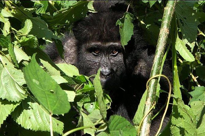 12 Day Affordable Safari-Gorilla and Primate Track Uganda