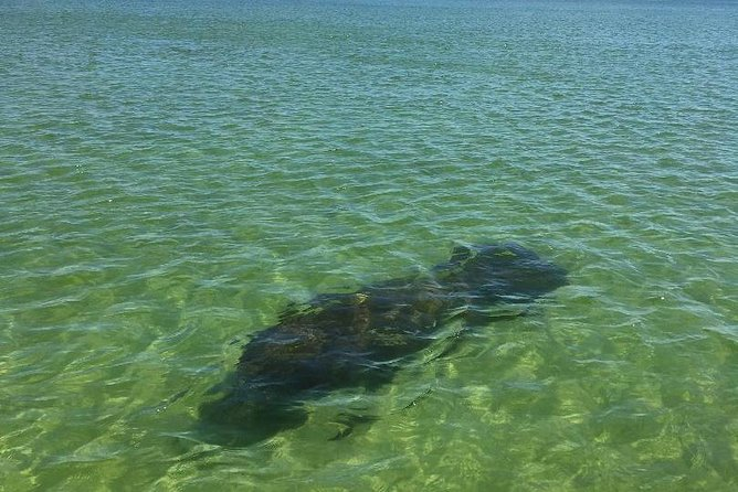 Dolphin Tours - Fort Myers Beach / Estero Bay photo 9