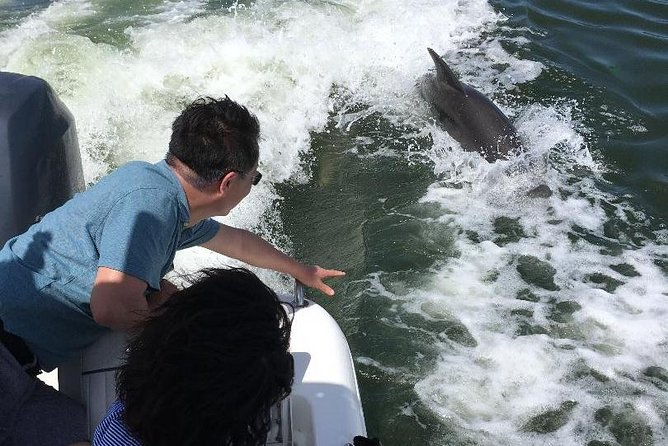 Dolphin Tours - Fort Myers Beach / Estero Bay photo 17
