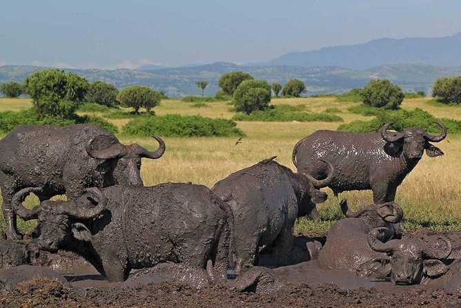 7-Day Ugandan National Parks Safari photo 8