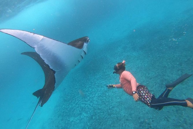 From Bali: Snorkelling with Manta Rays with Island Tour or Mangrove Kayaking