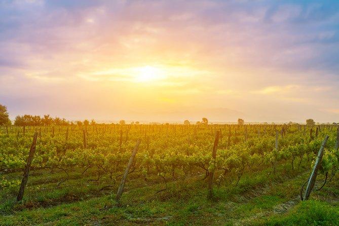 Kakheti wine region - Private Tour