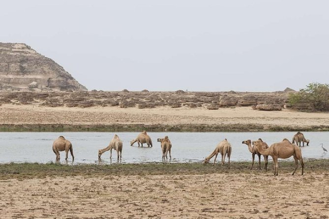 Half day tour The Best of West :Salalah Tours