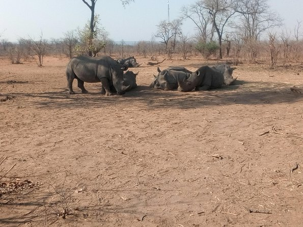 Long Rhino walk photo 12