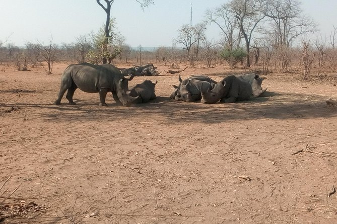 Long Rhino walk photo 20