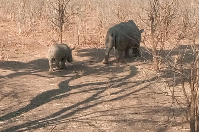 Long Rhino walk photo 2