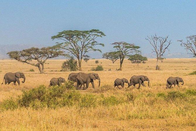 7 Nights / 8 Days . Best of Tanzania & Kenya Wildlife Safari