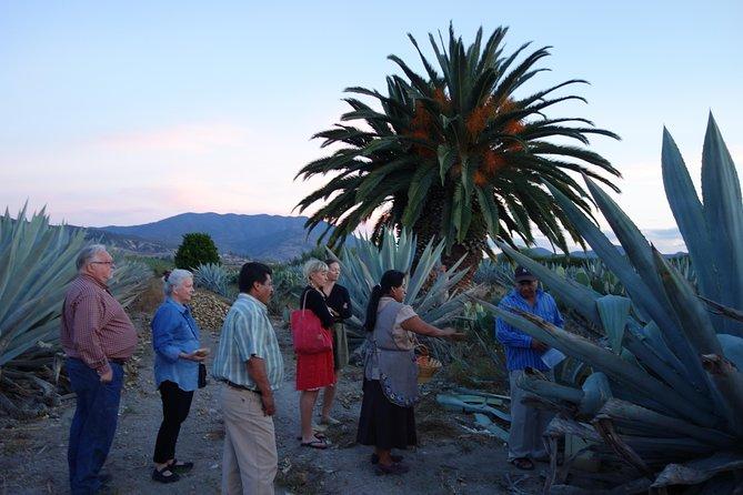 Pulque Tour Plus: Aguamiel Harvest in the Field with Zapotec Dinner