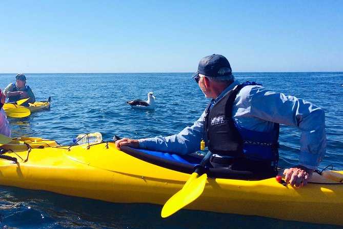 Wildlife kayak to Nugget Point, the Catlins