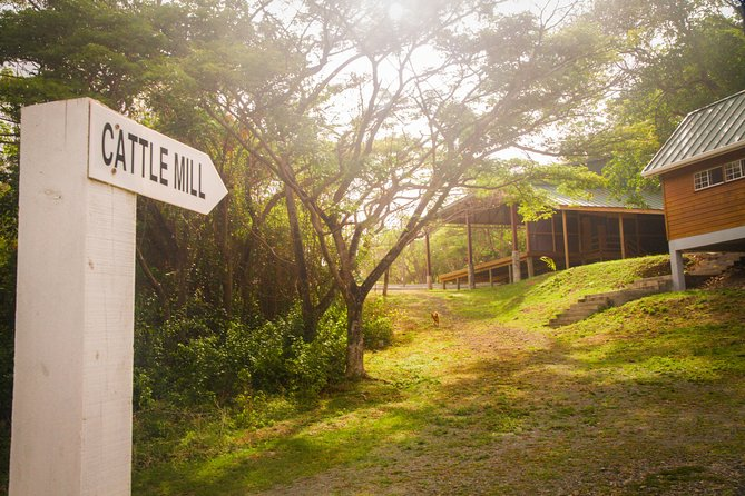 East Coast Riding Stable: Horseback Riding Excursion St. Lucia photo 2