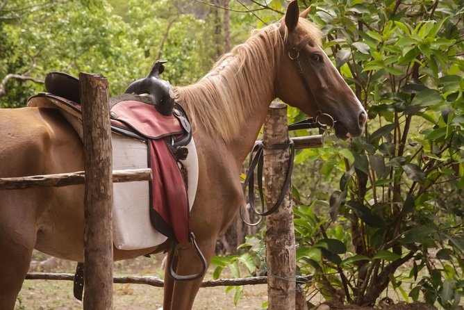 East Coast Riding Stable: Horseback Riding Excursion St. Lucia photo 16