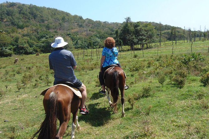 East Coast Riding Stable: Horseback Riding Excursion St. Lucia photo 3