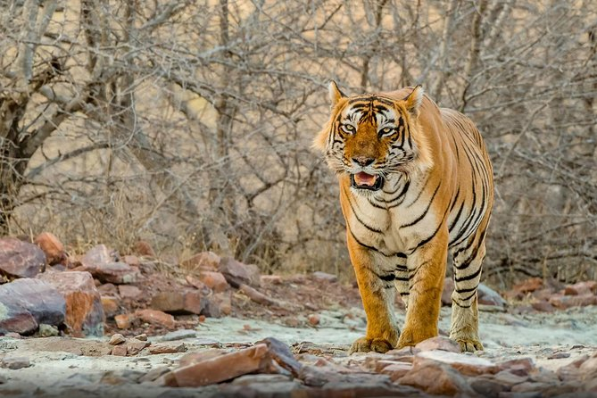 Delhi, Agra, Jaipur and Ranthambore - 5 Days Golden Triangle Tour