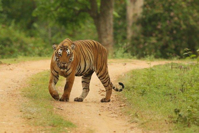 8 Days Golden Triangle Tour Ranthambore Delhi Agra Jaipur Ranthambore