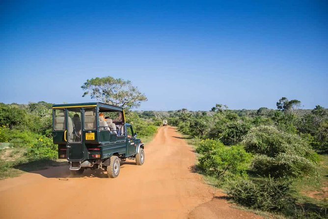 Yala National Park Jeep Safari - Half Day photo 3