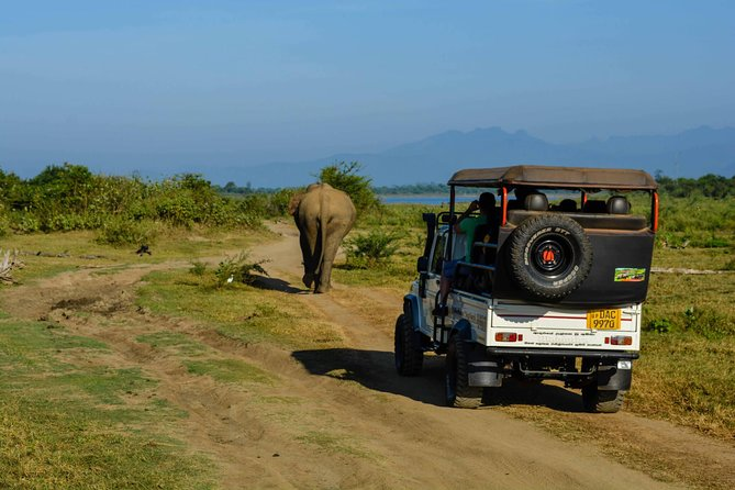 Yala National Park Jeep Safari - Half Day photo 8