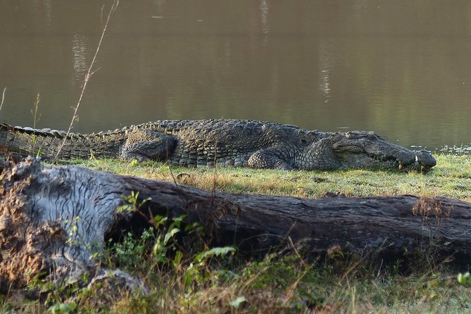 Yala National Park Jeep Safari - Half Day photo 4