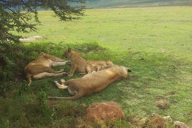 4 Days / 3 Nights Lake Manyara, Ngorongoro and Serengeti