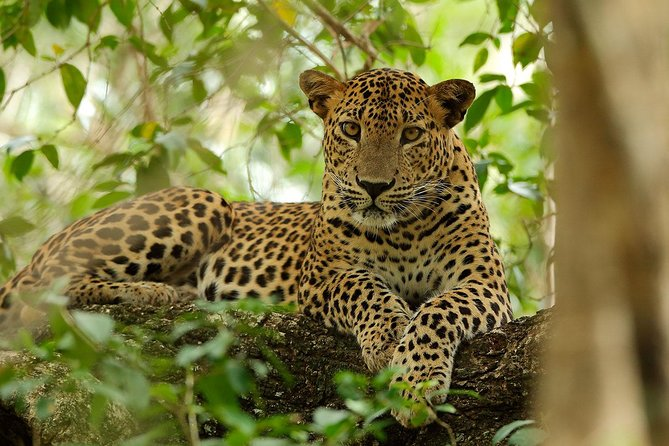 Yala National Park Private Safari (All Inclusive) From Mirissa