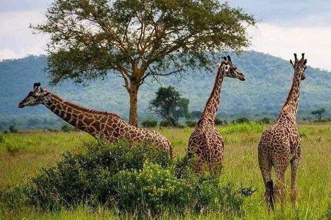 3days 2nights Tour to Uluguru Mountain and Mikumi National Park