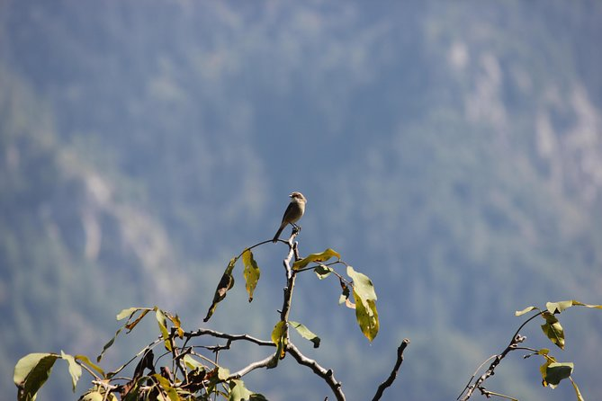 Bird-watching Hikes around Jibhi photo 1