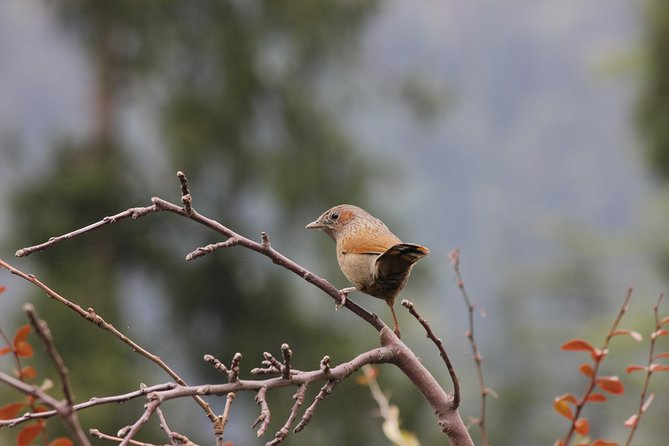 Bird-watching Hikes around Jibhi photo 9