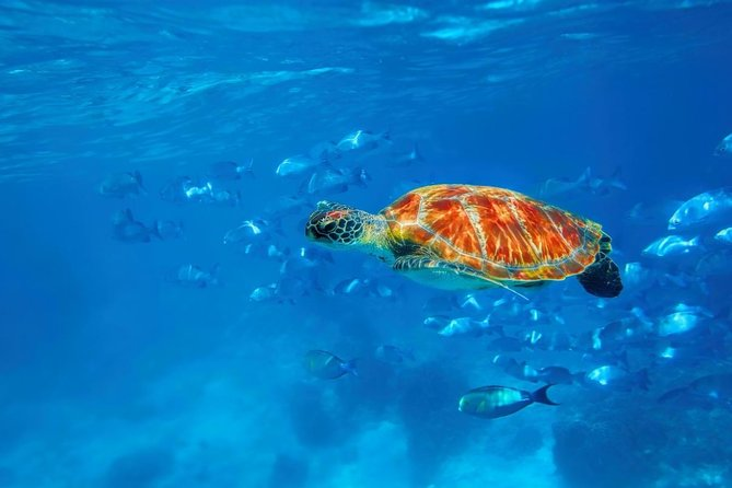 Similan Islands Adventure Day Trip: Snorkeling with Turtles