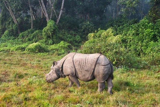 1 Night Glimpse of Chitwan Tour from Kathmandu or Pokhara - Vice Versa