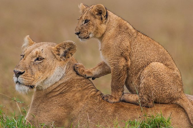 4 Days Mombasa Safari – Tsavo West, Amboseli & Tsavo East National Parks photo 9