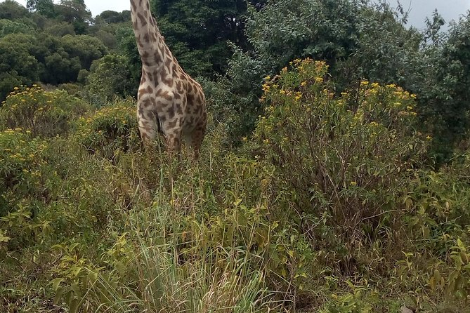 Day Trip to Arusha national Park photo 4